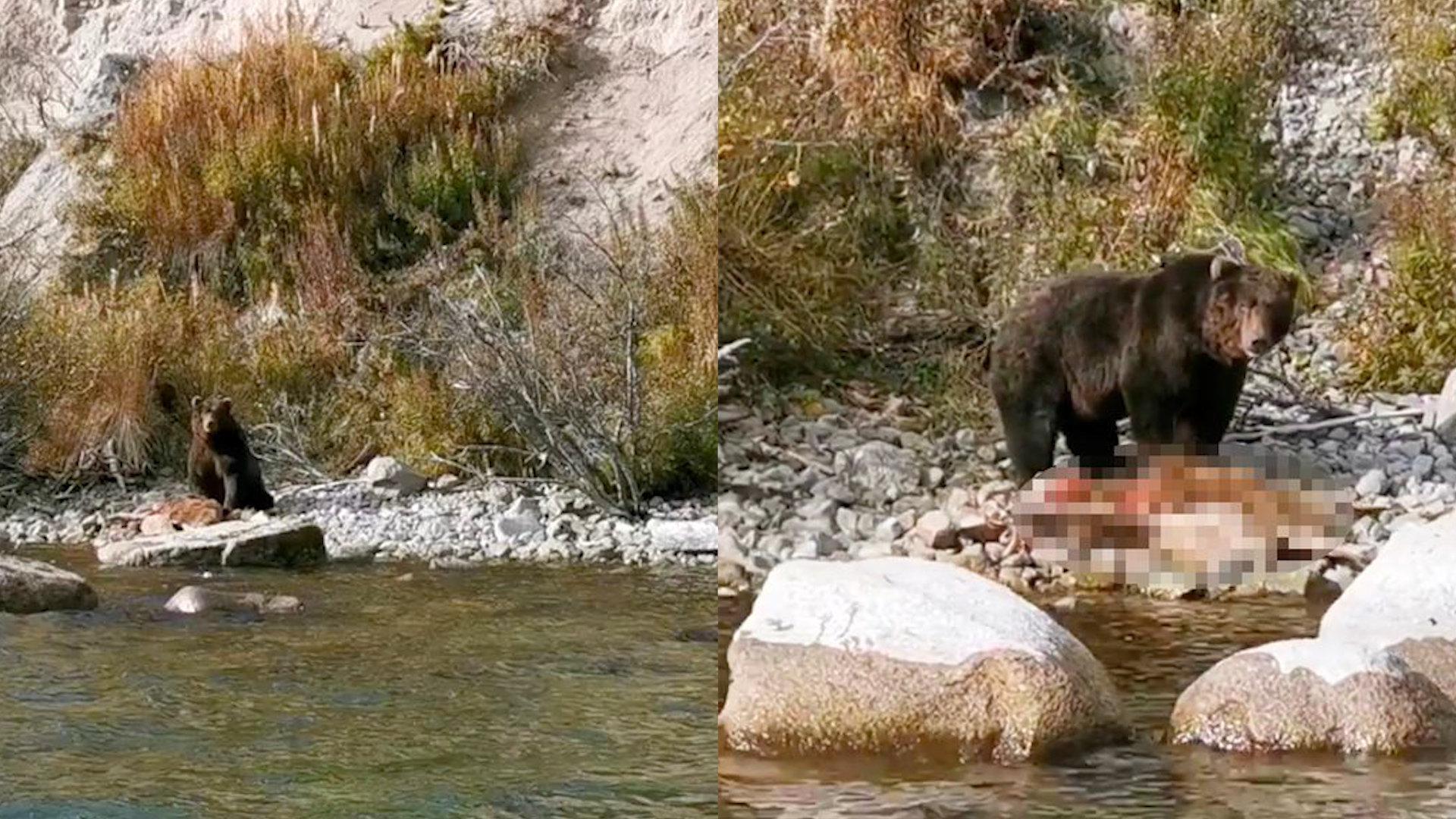 男子乘船时见棕熊在吃大块吃肉,看清猎物的模样后无法淡定