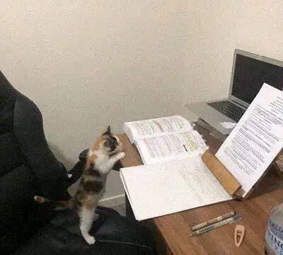 小猫在看书,主人以为它想学习,后来才知道是肚子饿了
