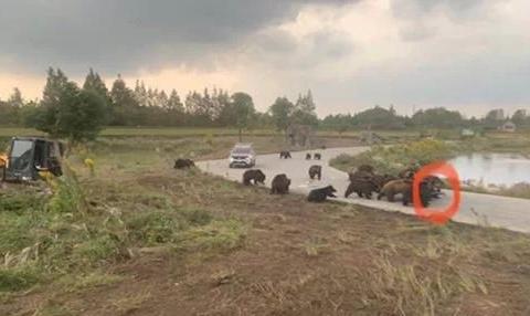 上海动物园熊吃人事件引发关注,其实熊才是受害者?