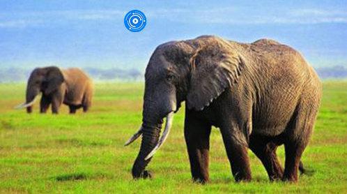 游客锐减致八成泰国象园倒闭,泰国旅游业靠卖油条、发消费券自救
