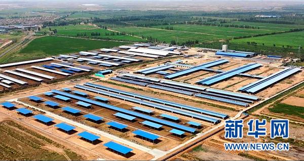 吴忠市一大型现代化奶牛养殖基地