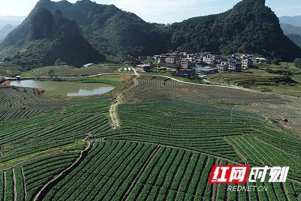 中南大学百万订单助力江华长山村产业发展