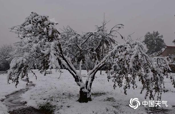 甘肃多地雨雪现身局地暴雪 多处高速路段受影响实施临时管制图片