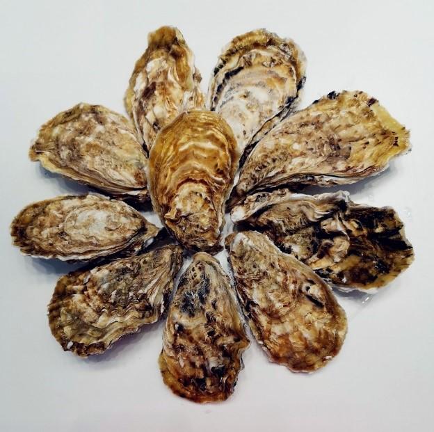 """中国科学院海洋研究所历时十余年培育""""海蛎1号"""" 有望成为牡蛎国际市场高端产品"""