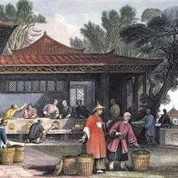 什么样的茶才能称之为「宫廷级」 ?