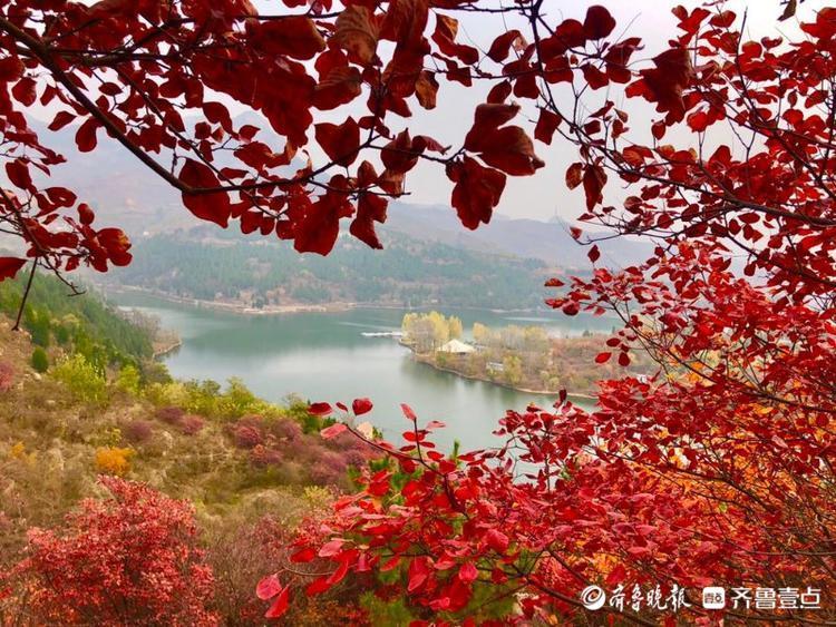 秋见好时光 秋叶红了!济南红山翠谷红叶夺目醉游人