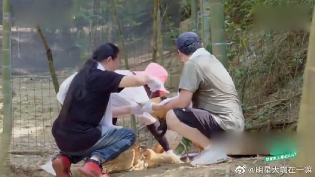 """别看李湘胖,下地""""抓鸡""""比年轻人还利索~ 王岳伦完全看傻了眼!"""