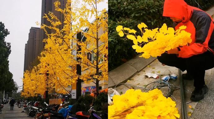 郑州商场撸掉银杏真树叶绑上假的……