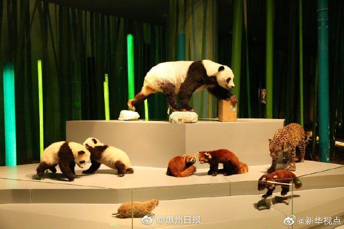 成都大熊猫博物馆开启内部试运行