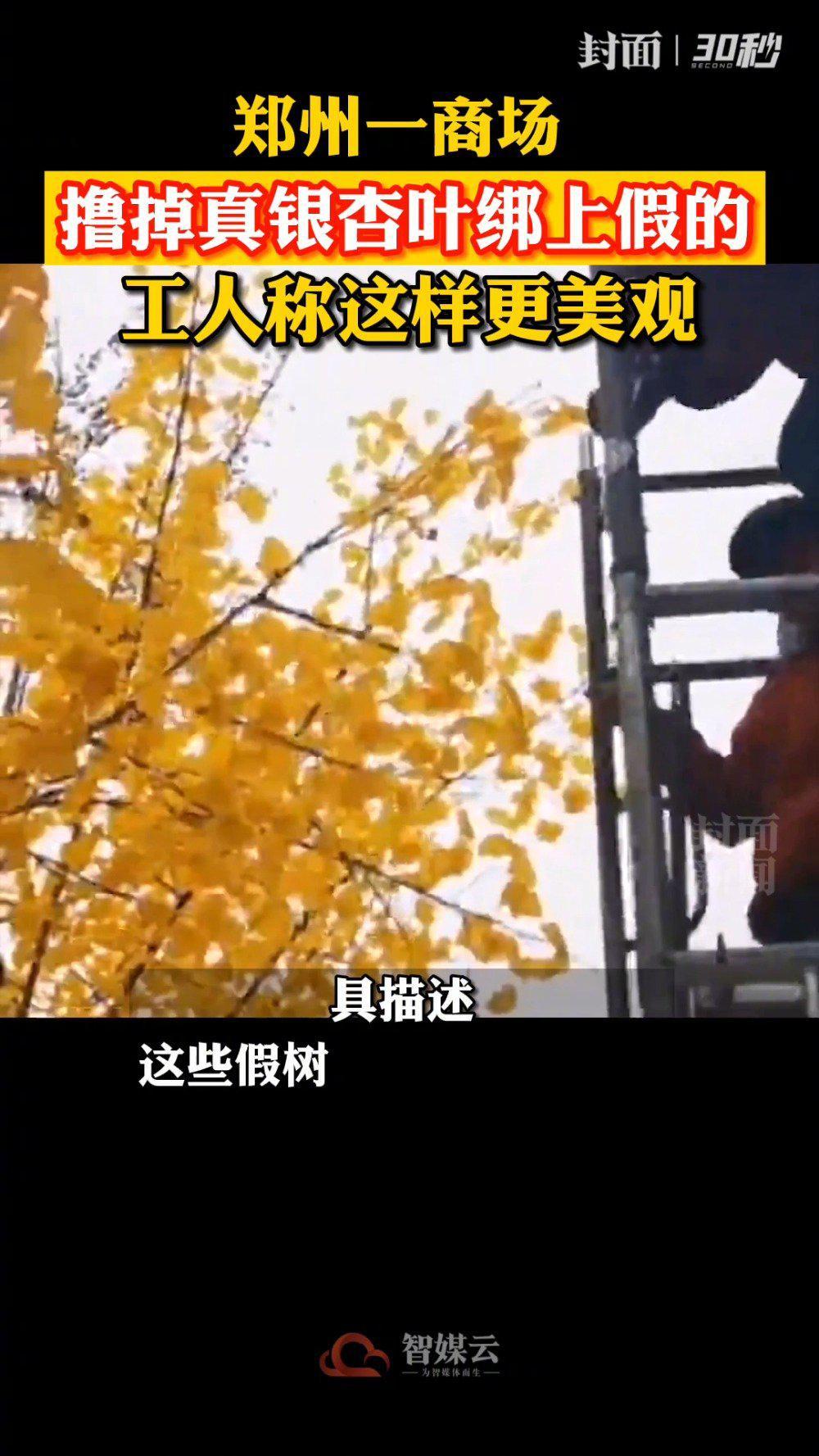 商场回应给银杏绑假树叶:树叶自然掉落……