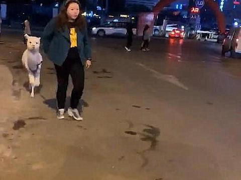 美女牵着宠物走过来,看见是羊驼后赶紧溜了:就怕被喷口水