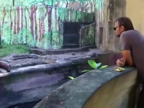 这金毛猩猩成精了,能干木匠活,还能与人类交流!