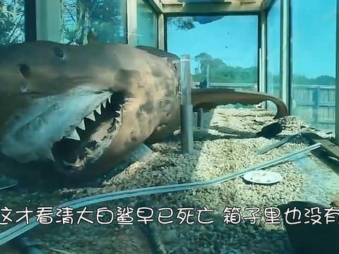 男子走进废弃动物园地下室,无法淡定了:水缸里是一条大白鲨!