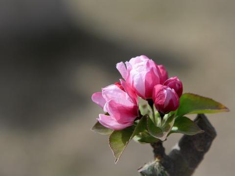 下半年红鸾星动,情缘环绕,桃花相伴获真爱,携手共度余生的生肖