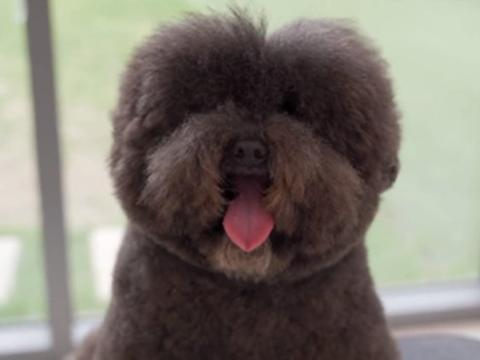 放狗狗在宠物医院洗澡, 主人回来看到它:减肥成功了?