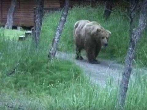 野外道路上黑衣男人后面有头熊, 最后熊如此做了