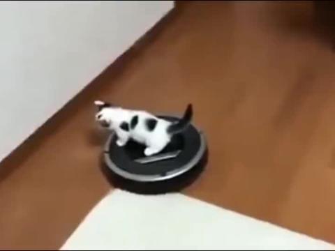猫咪正在玩,却莫名其妙被扫地机器人顺走了!猫:是我叫的车吗?