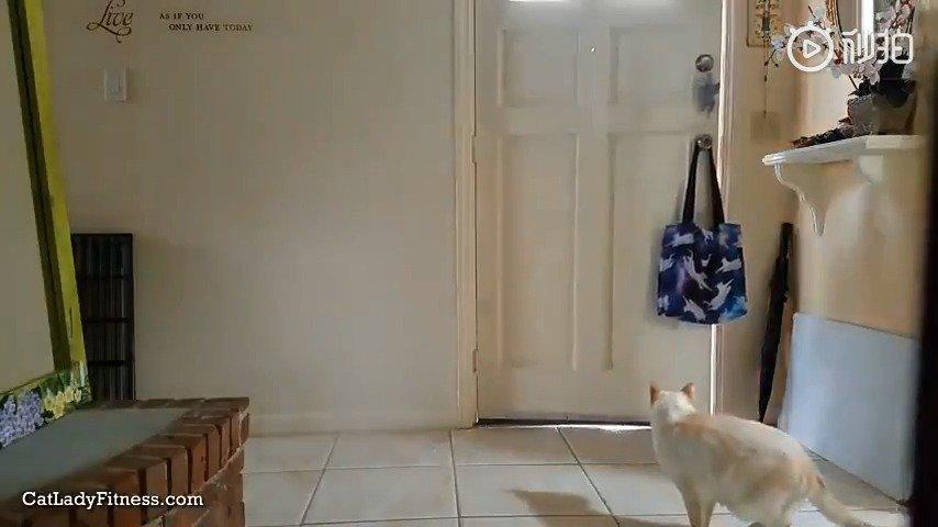 当你走以后,猫咪实际上是如许的