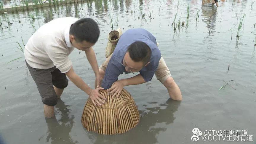 在四川省眉山市的丹棱县,很多农户都自主发展立体农业……