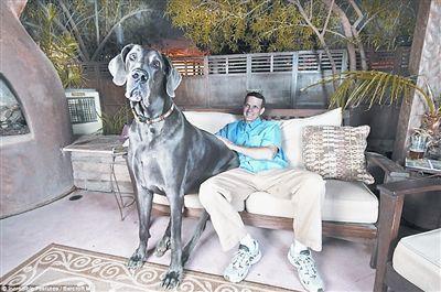 小到拳头大小的狗狗 同类却有着比人类还大的身躯