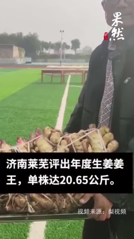 果然视频|厉害了!山东莱芜生姜王单株重40多斤