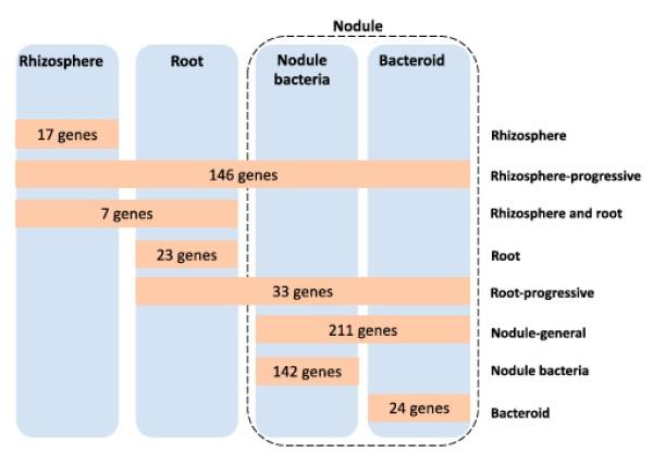武汉植物园等在根瘤菌-豆科植物共生阶段的重要基因挖掘中获进展