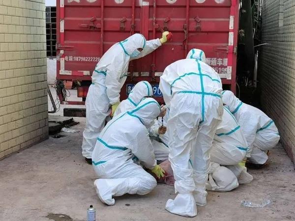 宁南查获非洲猪瘟疫情追踪:生猪就地无害化处理未流入市场