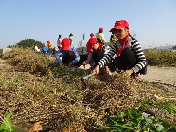 新桥小学开展新时代劳动教育实践志愿服务活动