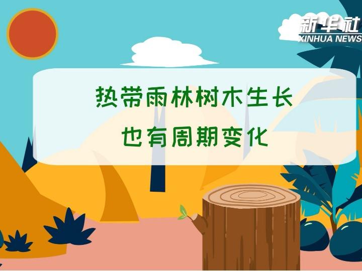 科画丨热带雨林树木生长也有周期变化