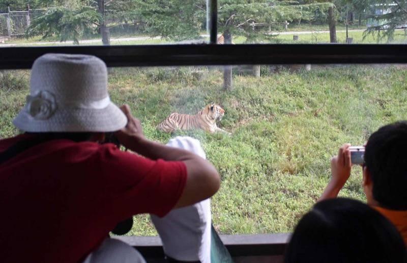 我们需要什么样的野生动物园