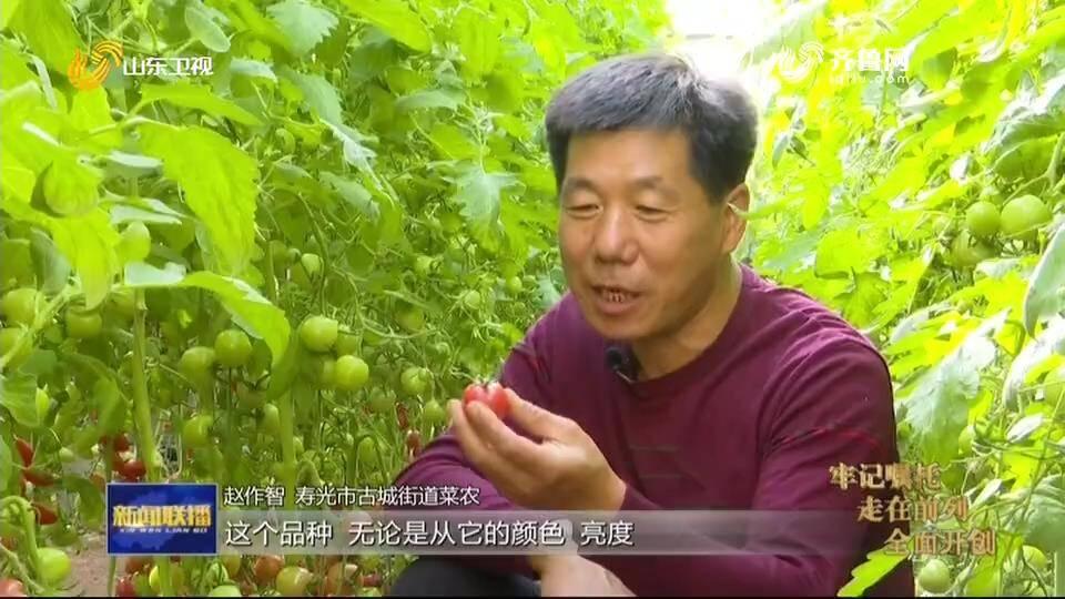 一亩番茄能多卖5000块钱!山东新模式加快农业科技成果转化为现实生产力