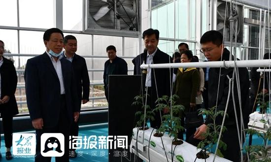 山东寿光:青州市政协主席刘永福稻田镇考察现代农业工作