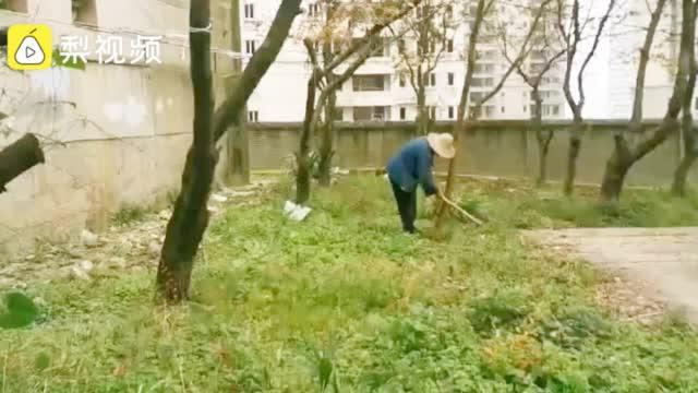 贵阳88岁老人义务植树上万棵,常上深山找树苗