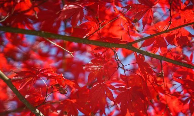 深秋红叶何处寻,陕西留坝看秦岭——你准备好出发了吗?