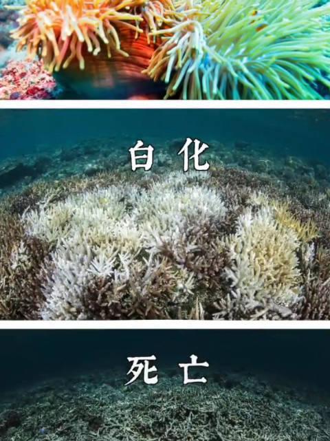 《最美中国第五季》已经于10月22日在优酷视频平台独家上线……