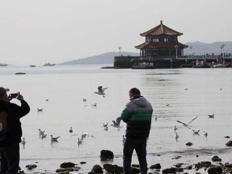 山东青岛:10多万只红嘴鸥飞到越冬,吸引市民海边喂食!