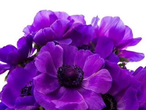 心理测试:你最想得到哪束花,测出你最近有啥好事要轮到你了?