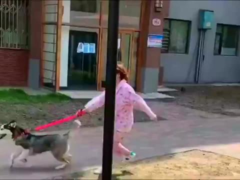 女生想象中养大型犬的样子,现实中却是这样的