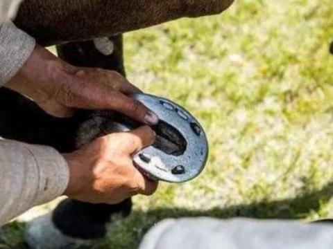 家养的马匹都需要定期修马蹄、钉马掌,为何野马不需要?
