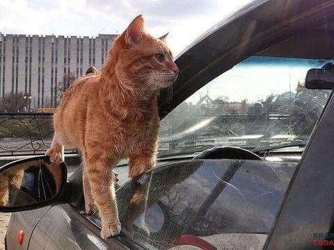 """出租车竟提供""""撸猫""""服务,载客率暴增!网友:招财猫?"""