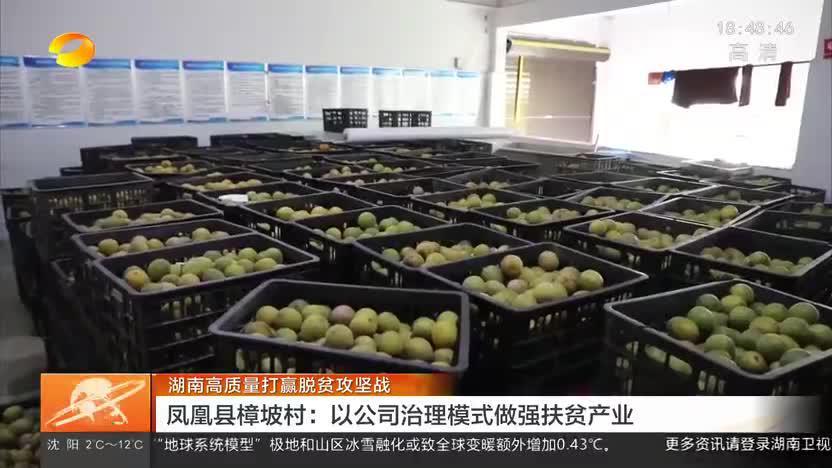湖南高质量打赢脱贫攻坚战 凤凰县樟坡村:以公司治理模式做强扶贫产业