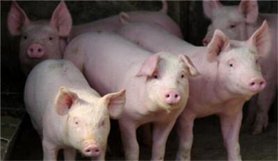 云南:前三季度生猪出栏2257.25万头 猪肉产量184.76万吨