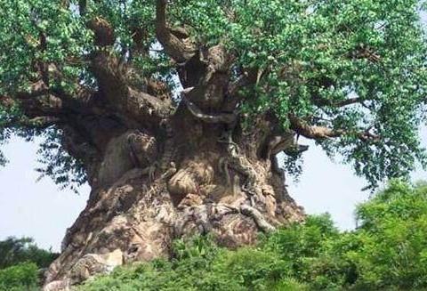 农村小伙在野外发现一颗怪树,远处望去树上爬满野兽被吓坏了