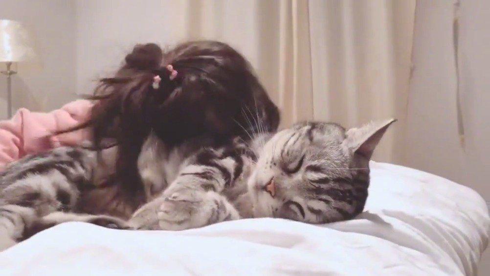 猫咪是不是只会对小朋友没脾气呀……
