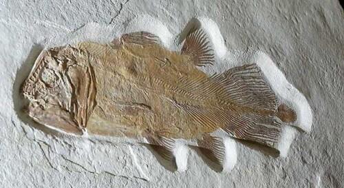2亿年前鱼化石预计将以5万英镑拍卖
