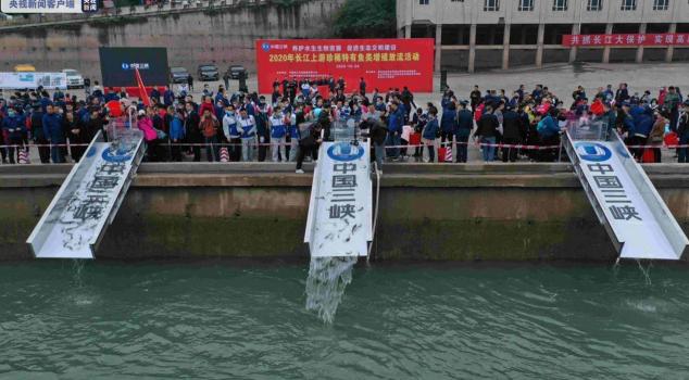 保护生物多样性:25.7万尾珍稀鱼类放归金沙江