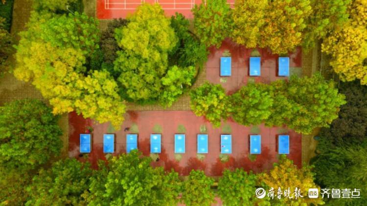 济南森林公园的秋天有多美?市民休闲健身如置身画中