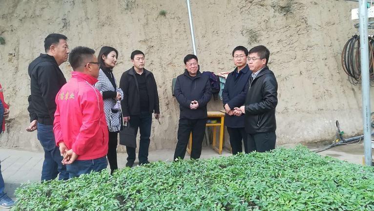 呼和浩特市科技局局长郭成岗一行调研呼市蔬菜育苗企业生产情况