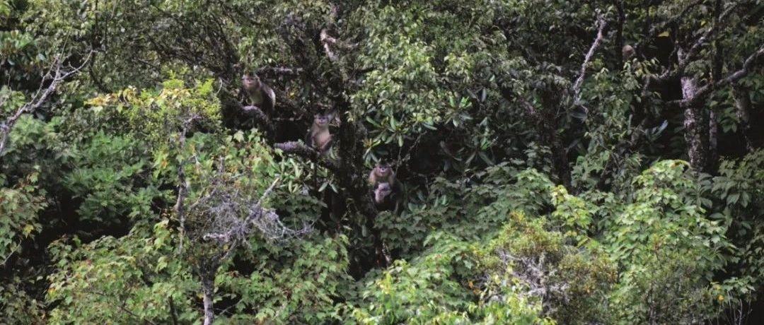 西南山地濒危旗舰物种监测保护机制创新