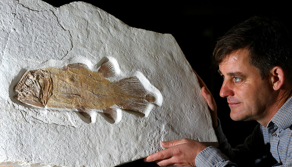 英国将拍卖罕见腔棘鱼化石